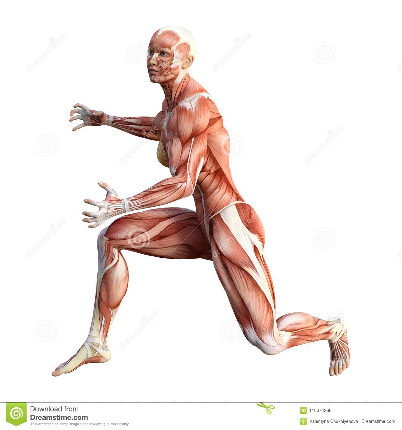 Old Fashioned Female Anatomy Figure Images - Physiology Of Human ...