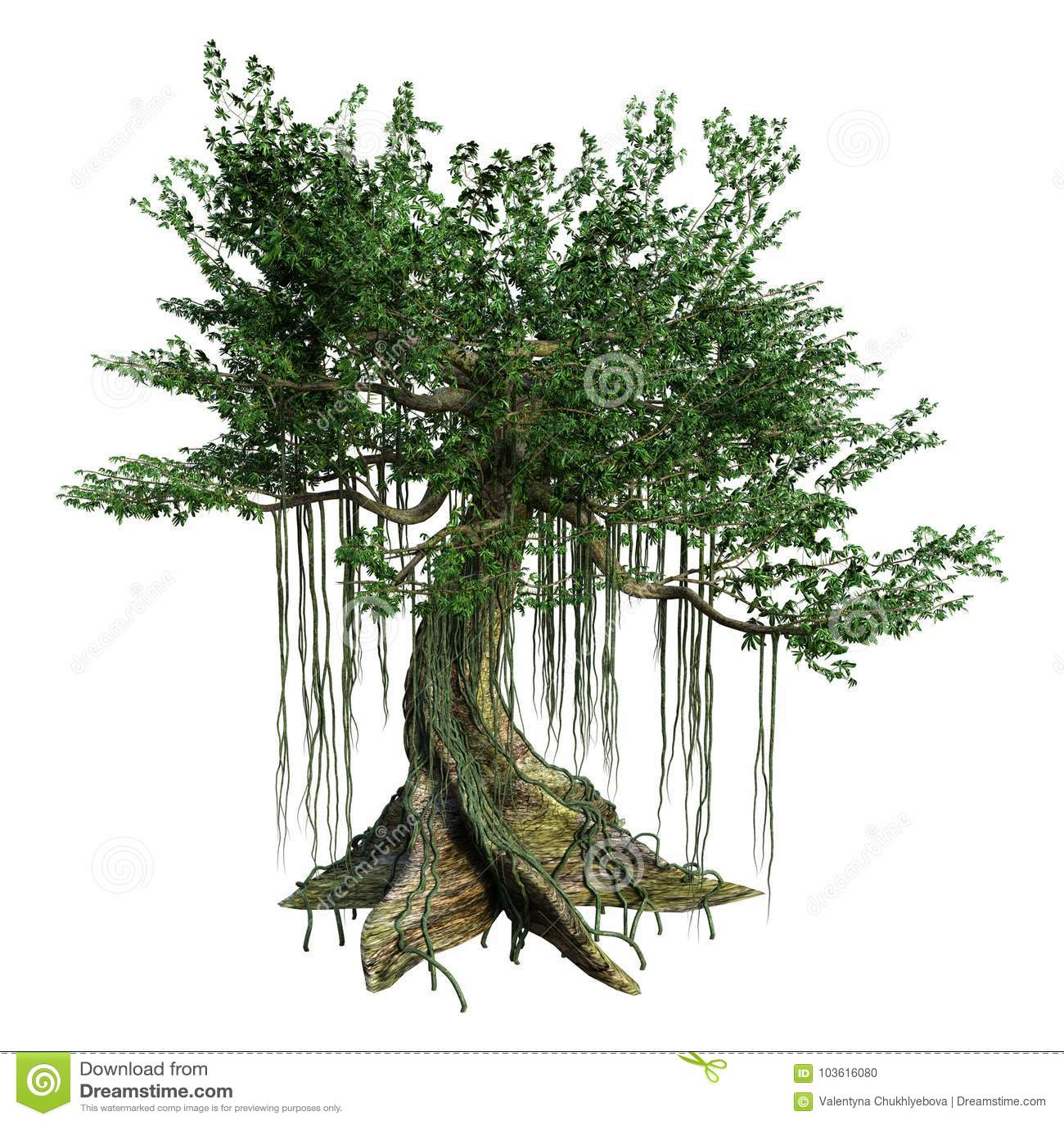3d Rendering Kapok Tree On White Stock Illustration Illustration