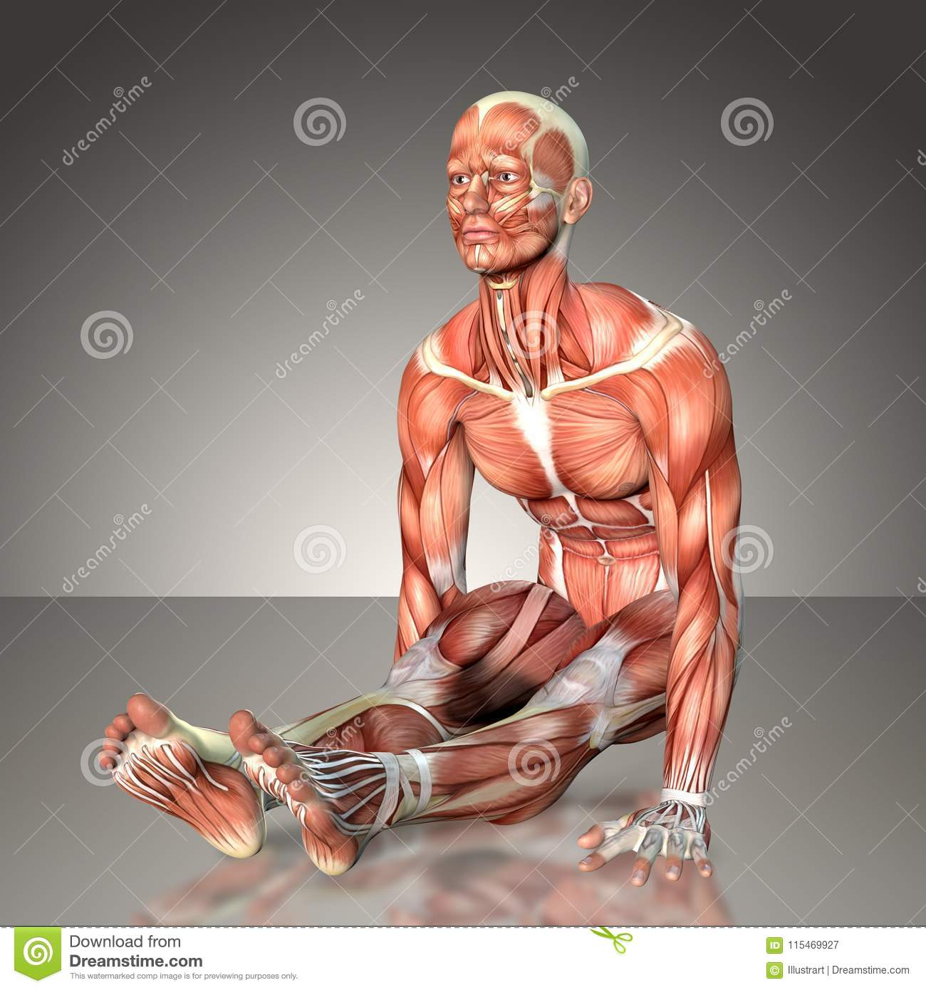 3d Rendering Of A Male Anatomy Figure In Exercise Pose Stock