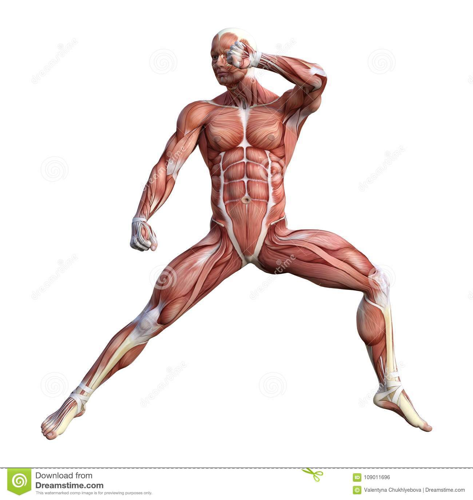 3d Rendering Male Anatomy Figure On White Stock Illustration