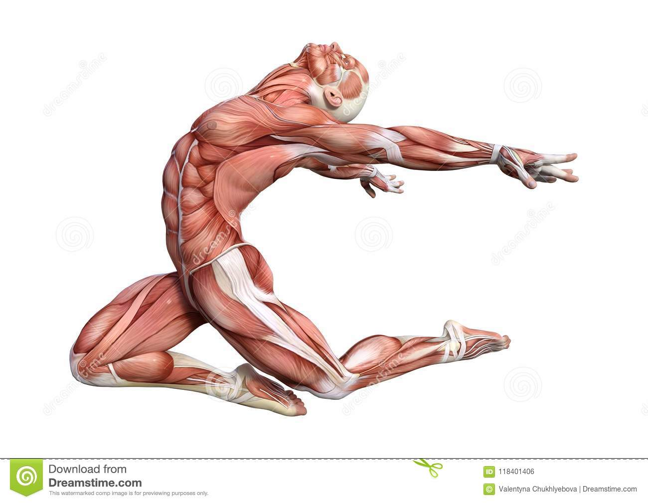 3d Rendering Male Anatomy Figure On White Stock Illustration