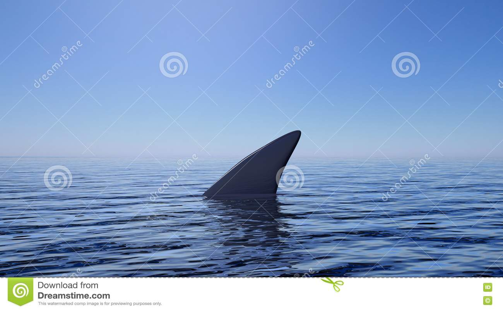 shark fin white background - photo #15