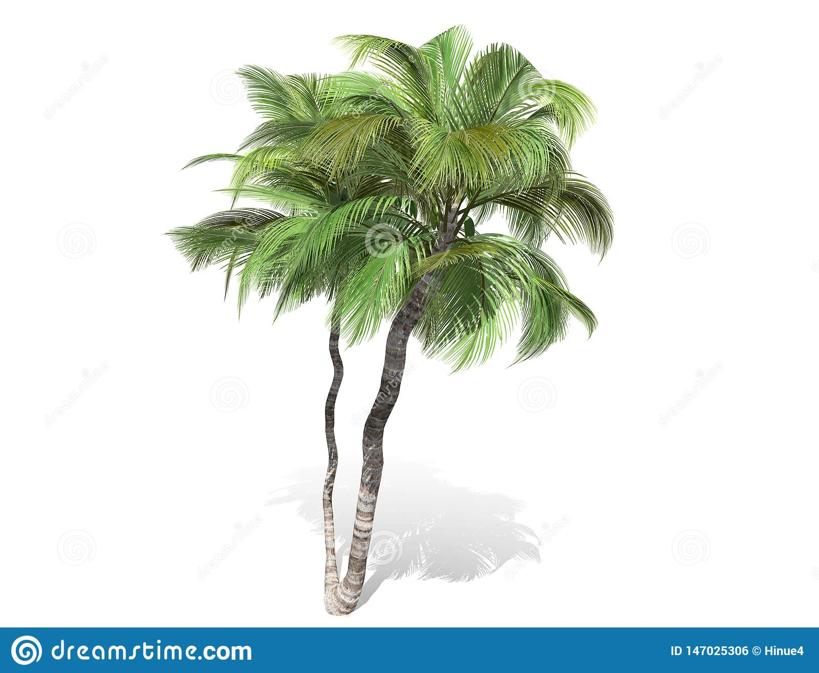 3D rendering - tall coconut trees isolated over a white background