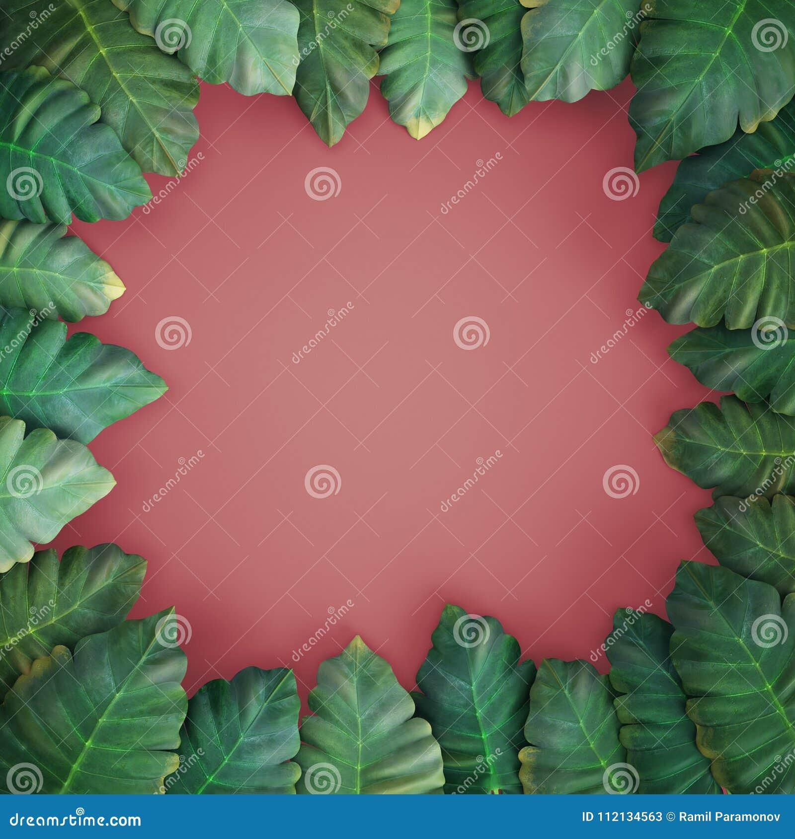3d renderr tropische bladeren, alocasia, roze achtergrond