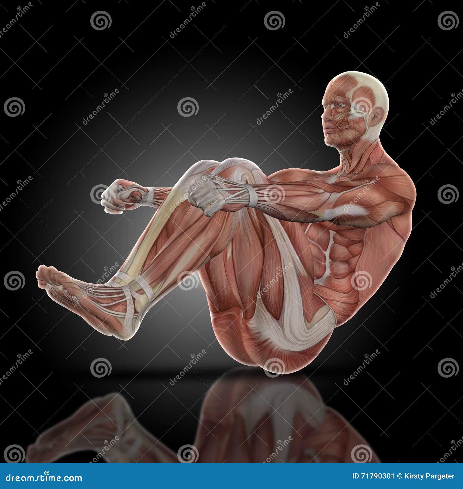 3D rendono di una figura medica con la mappa del muscolo dentro si siedono sulla posa