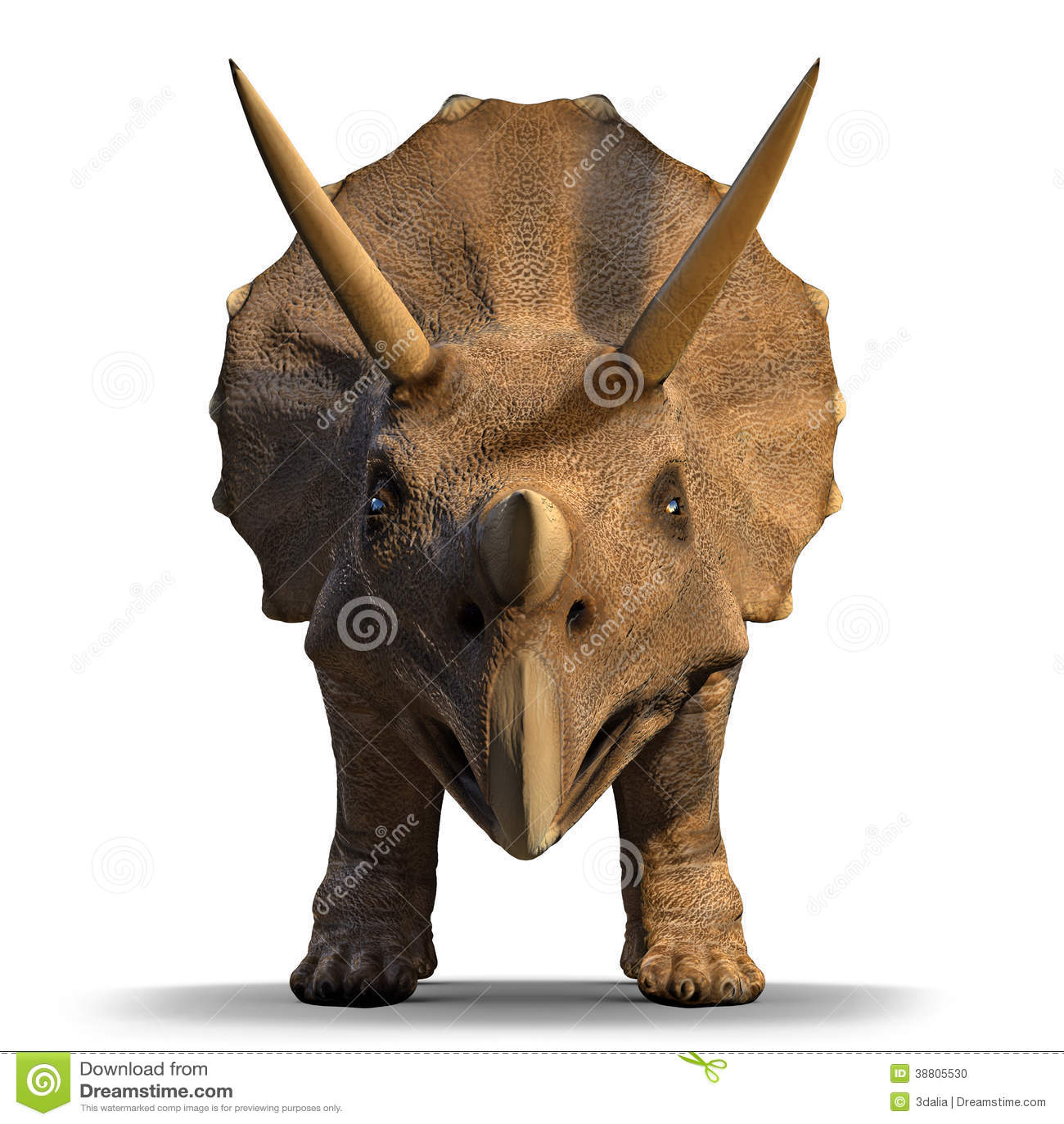 Raptor skull and brain drawing : pics |Velociraptor Skull Front