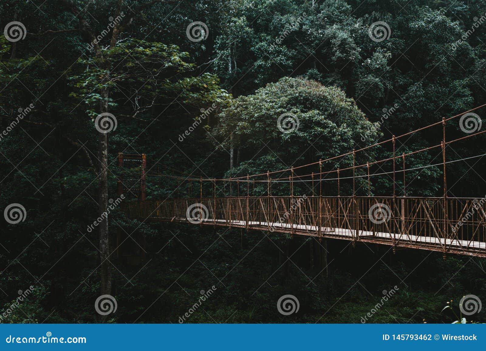 D?ugi baldachimu przej?cia most w lesie