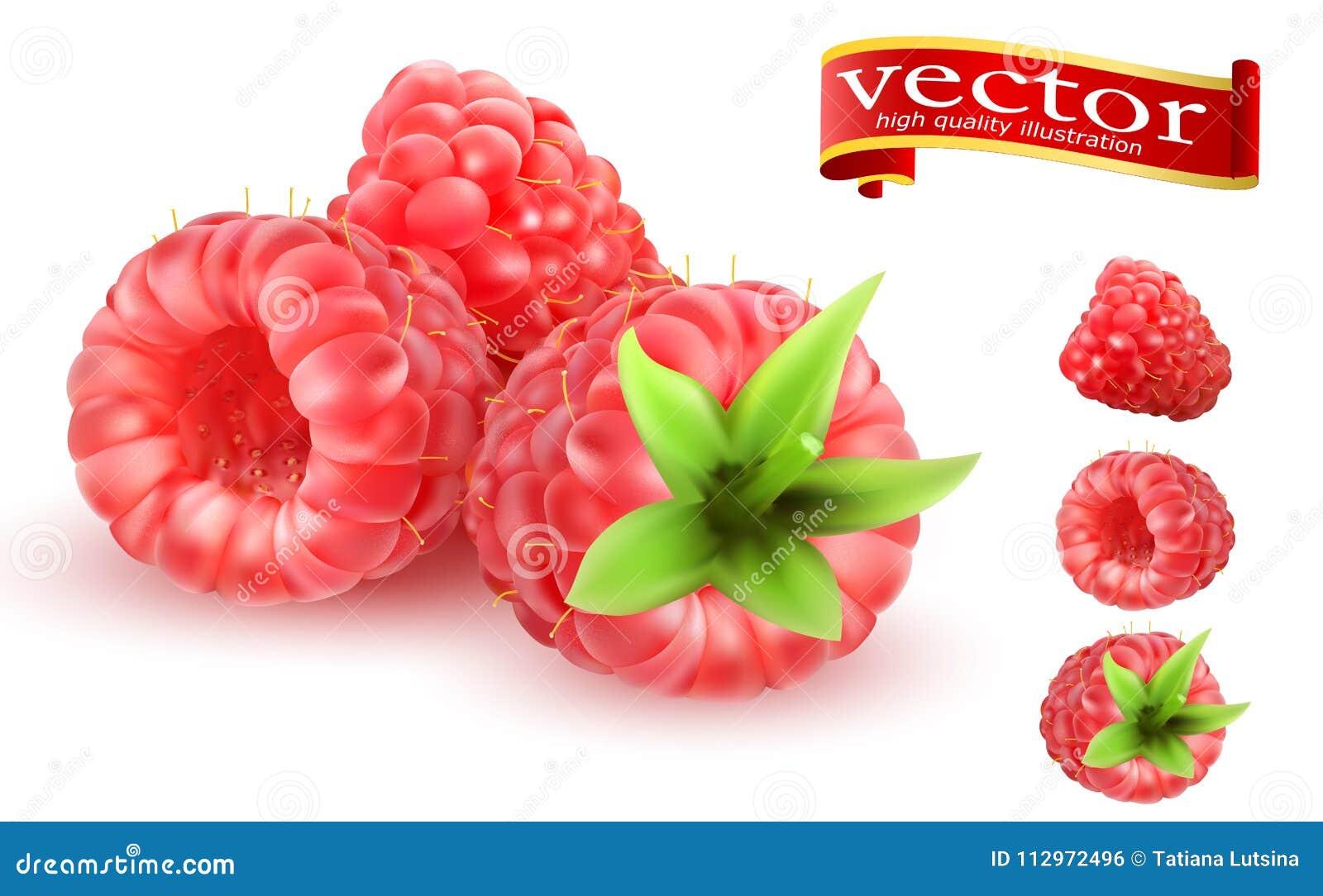 3d vector geplaatste pictogrammen van het frambozen de Zoete fruit Realistisch Berry Raspberries Icon Set Inzameling van rijpe fr