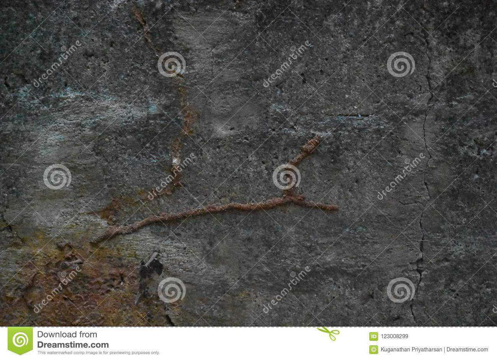 Daño de la termita