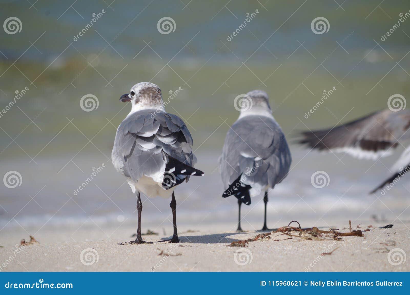 Da parte traseira: dois pássaros
