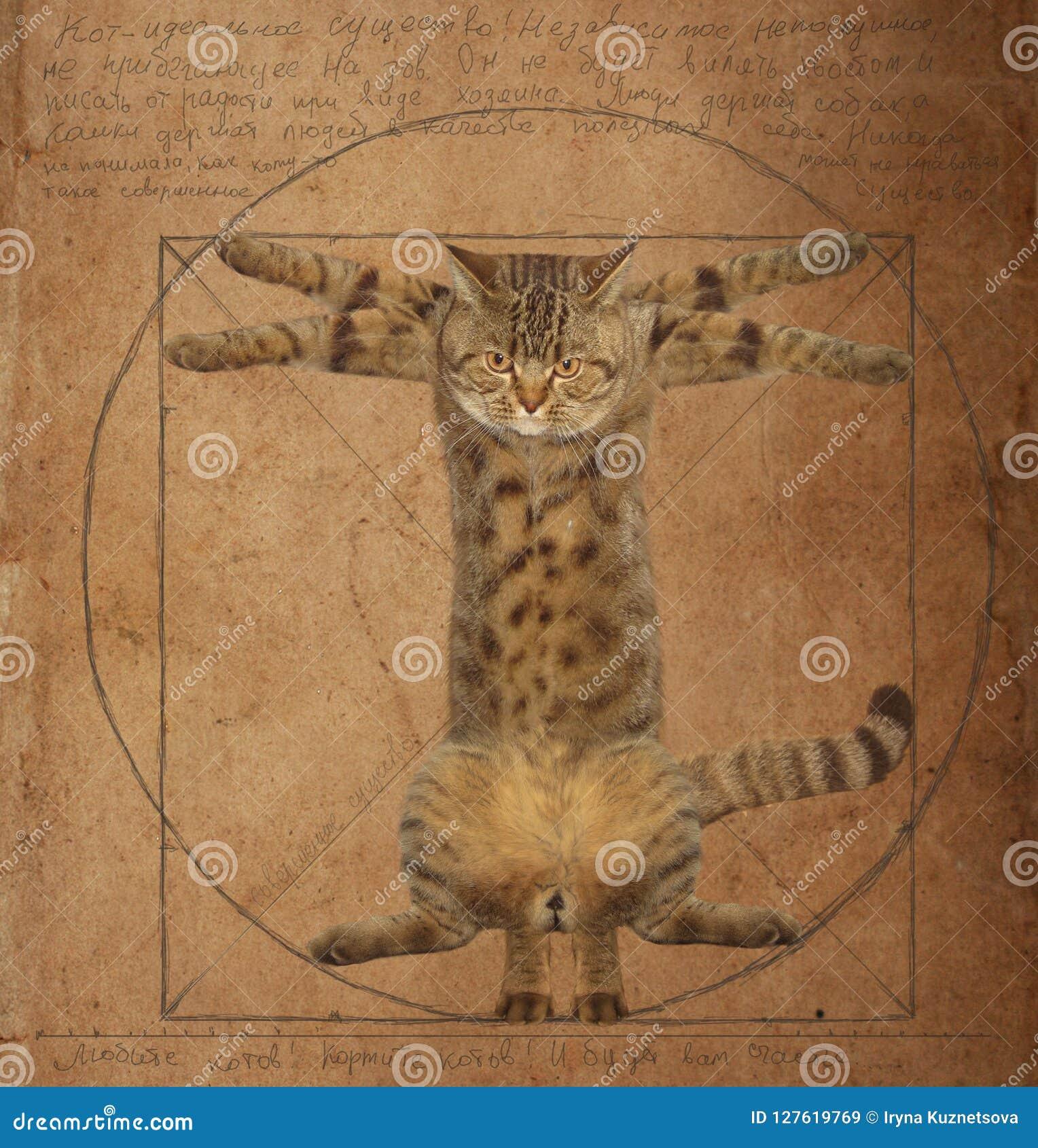 Da Vinci Cat