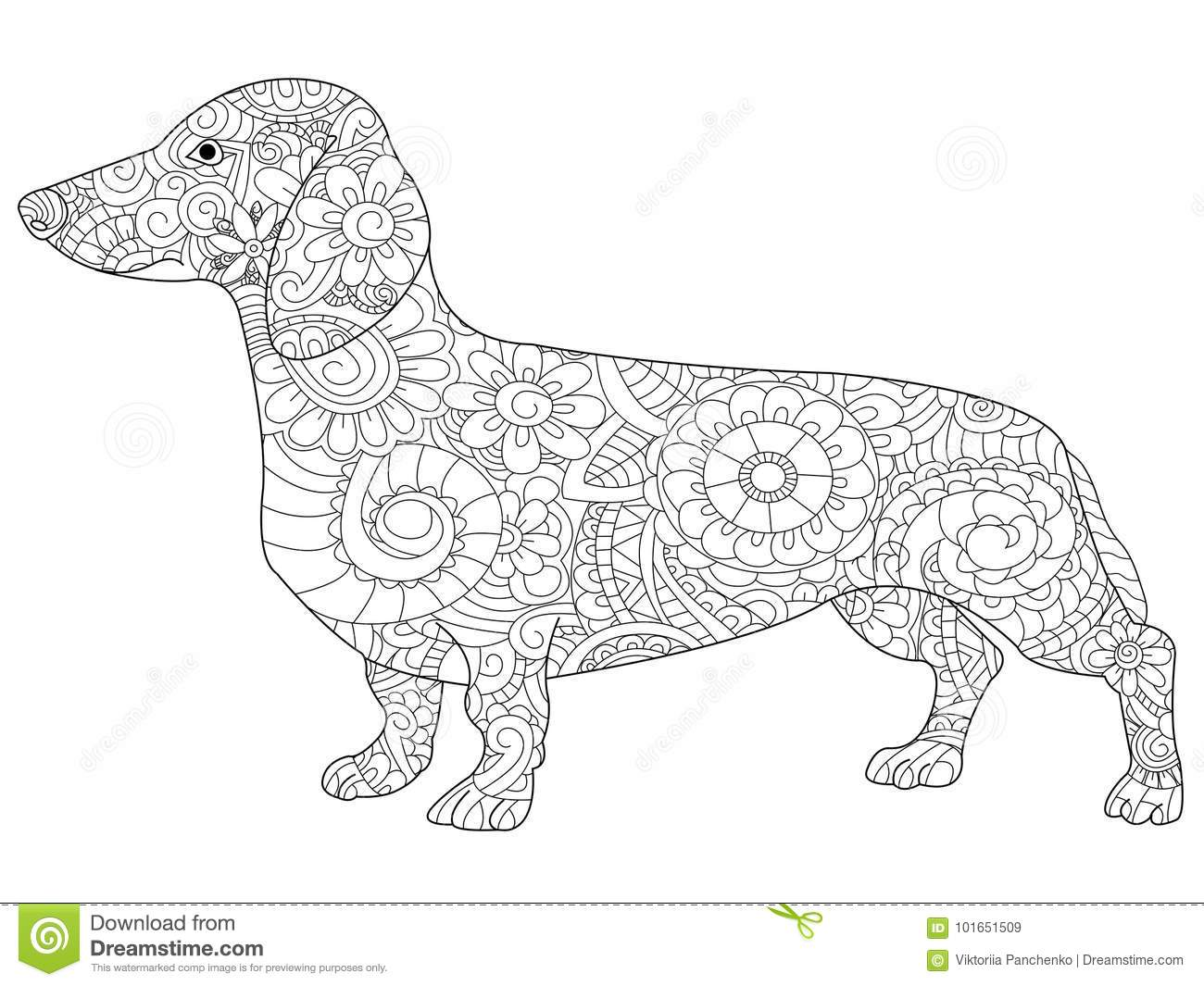dachshund coloring book for adults raster stock