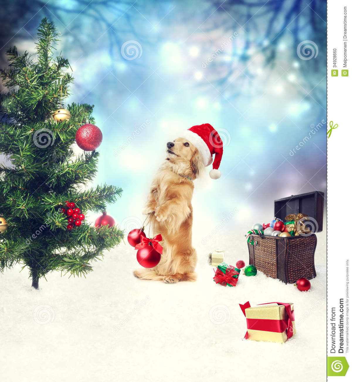 Christmas Tree Decorations For Dogs : Dachshund dog decorating christmas tree stock photo