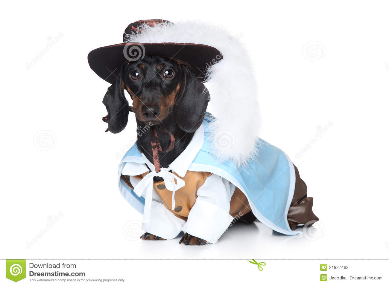 Dachshund In Fashionable Clothes Stock Photography - Image ...