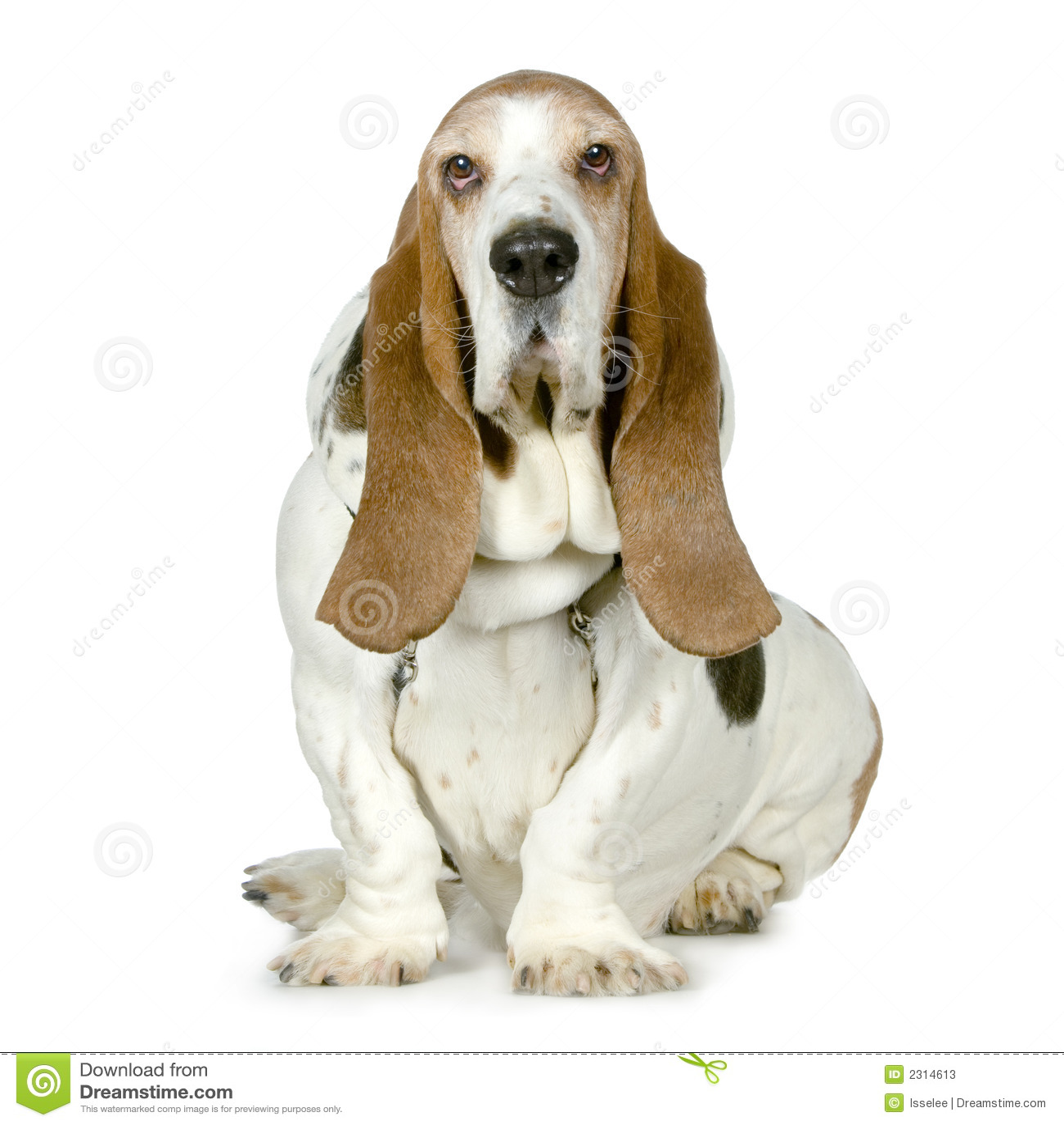 dachshund jagdhund hush puppies stockfotos bild 2314613. Black Bedroom Furniture Sets. Home Design Ideas