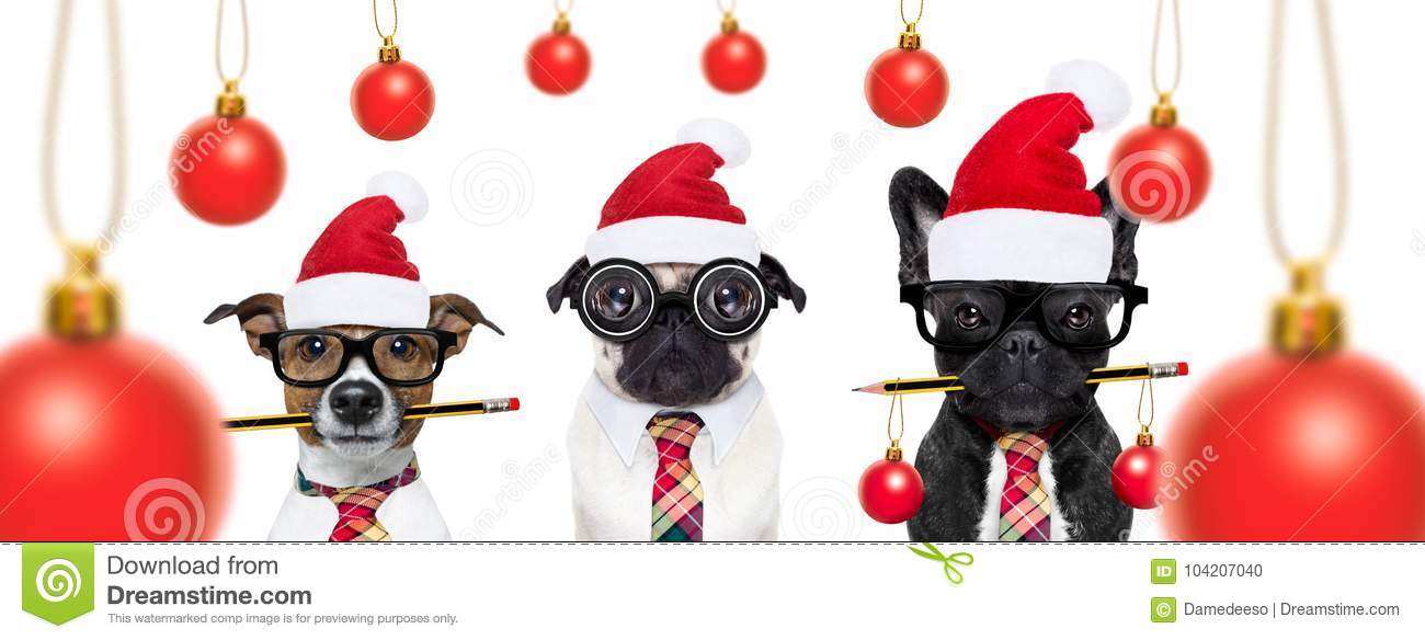 Dogs On Christmas Holidays Stock Photo Image Of Celebration 104207040