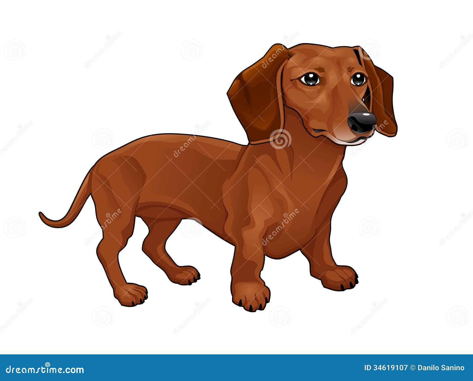 dachshund stock illustrations 4 695 dachshund stock illustrations rh dreamstime com Dachshund Christmas Clip Art Dachshund Images Free