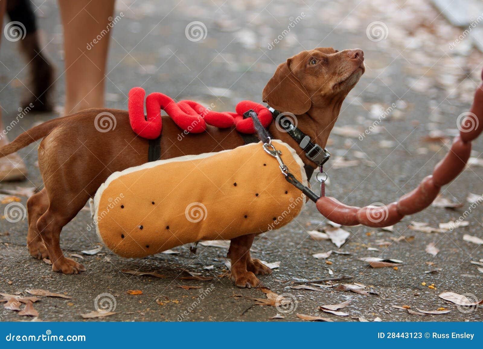 De perro caliente x - 3 1