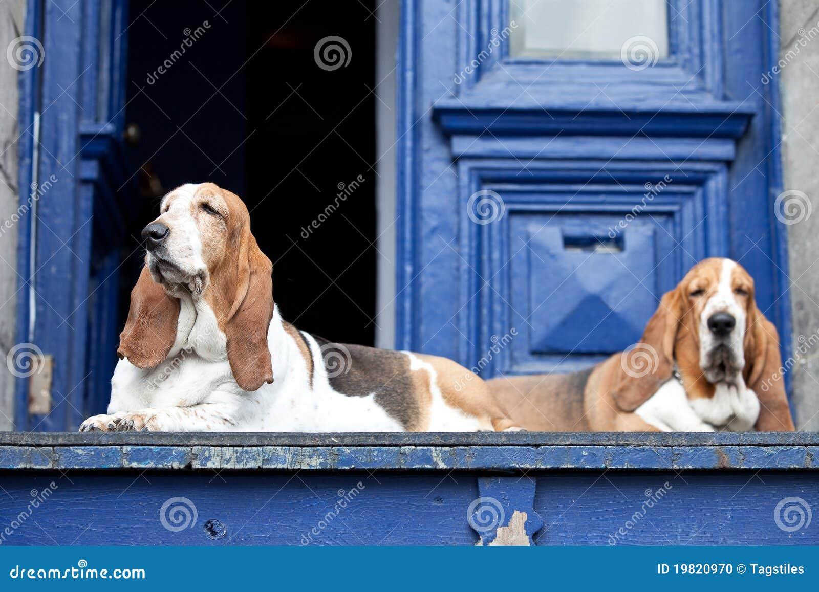 Download Dachshundjagdhunde stockfoto. Bild von entspannt, entspannen - 19820970