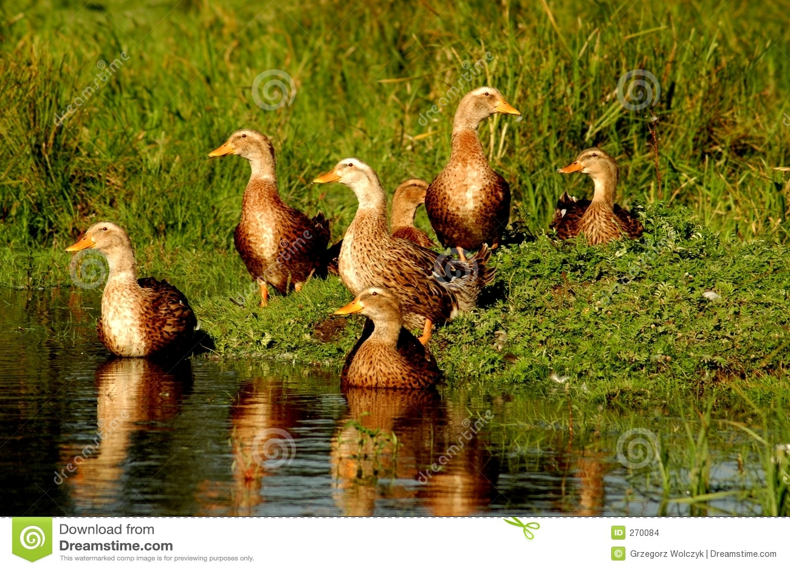 Dack Stock Images - Image: 270084