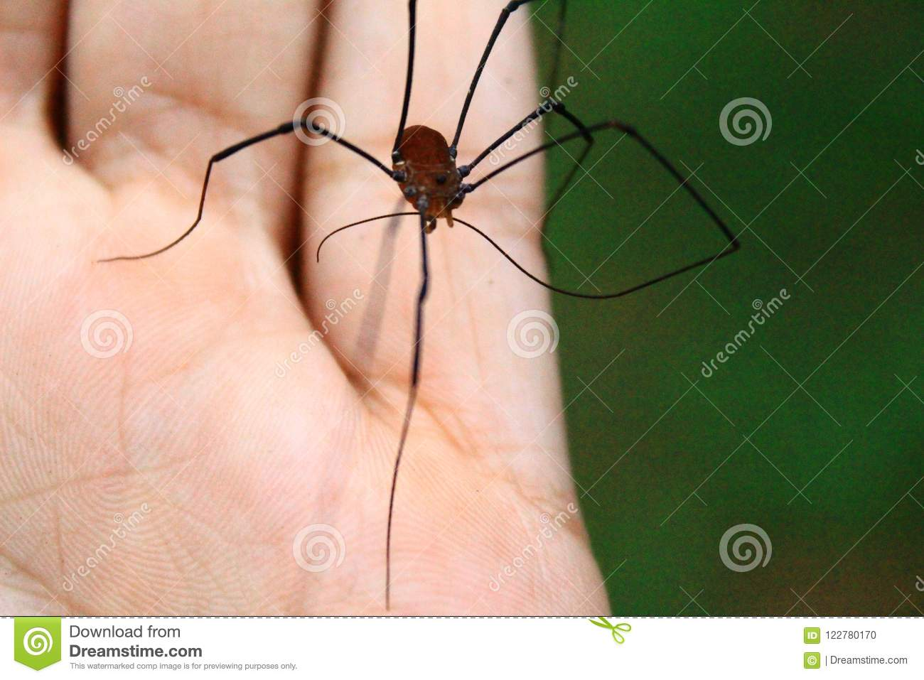 daddy long legs free download