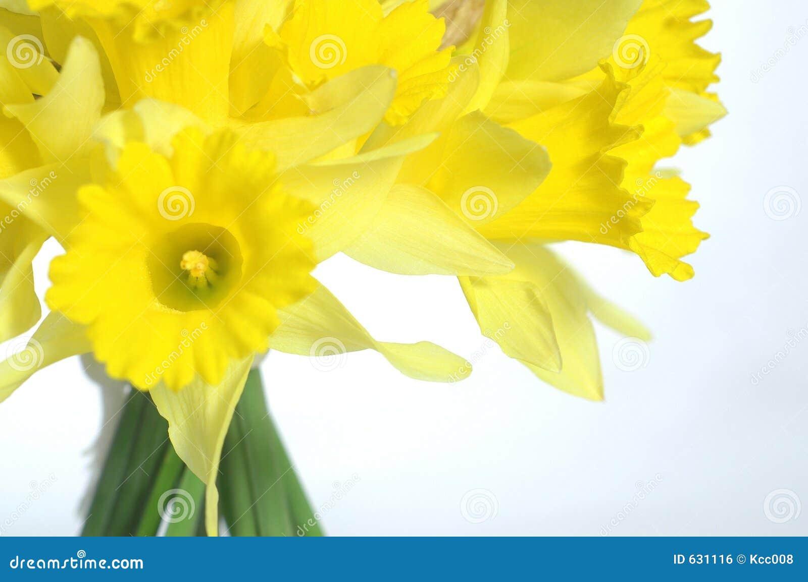 Download Daffodil букета стоковое фото. изображение насчитывающей arranger - 631116
