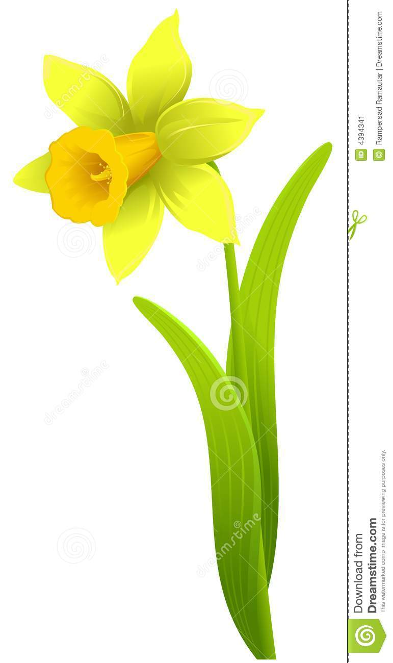 Daffodil Stock Image - Image: 4394341 White Daisy Flowers Clipart