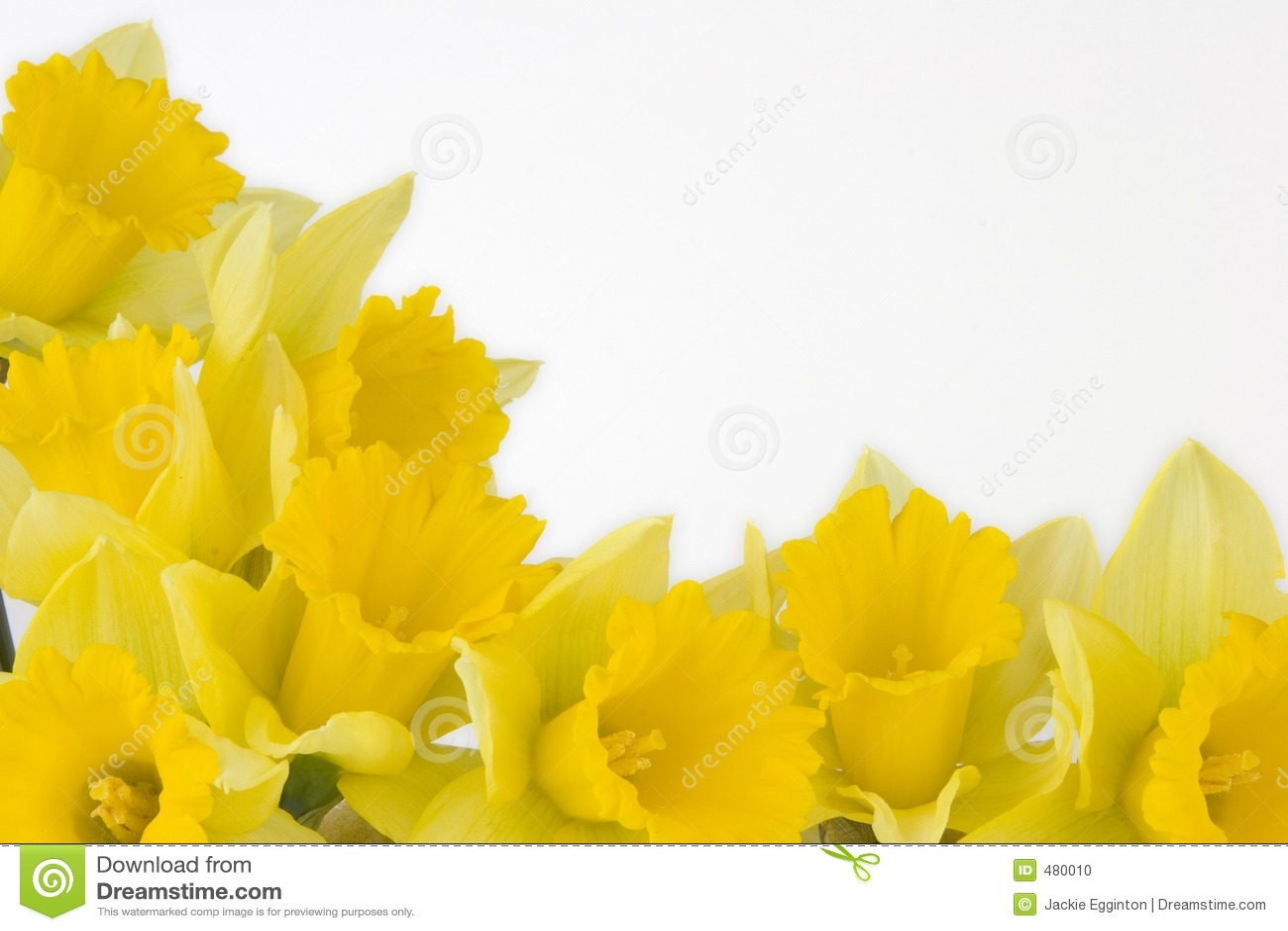 Daffodil Border Stock Photo - Image: 480010