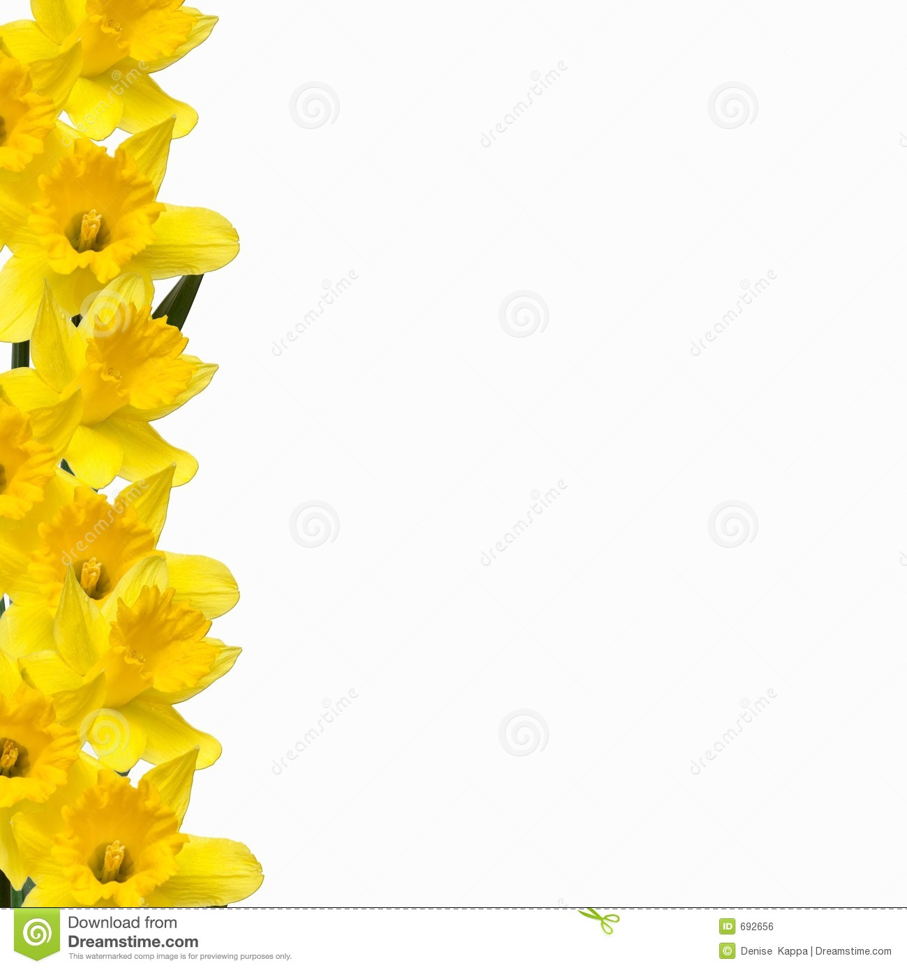 Daffodil Border stock photo. Image of springtime ...