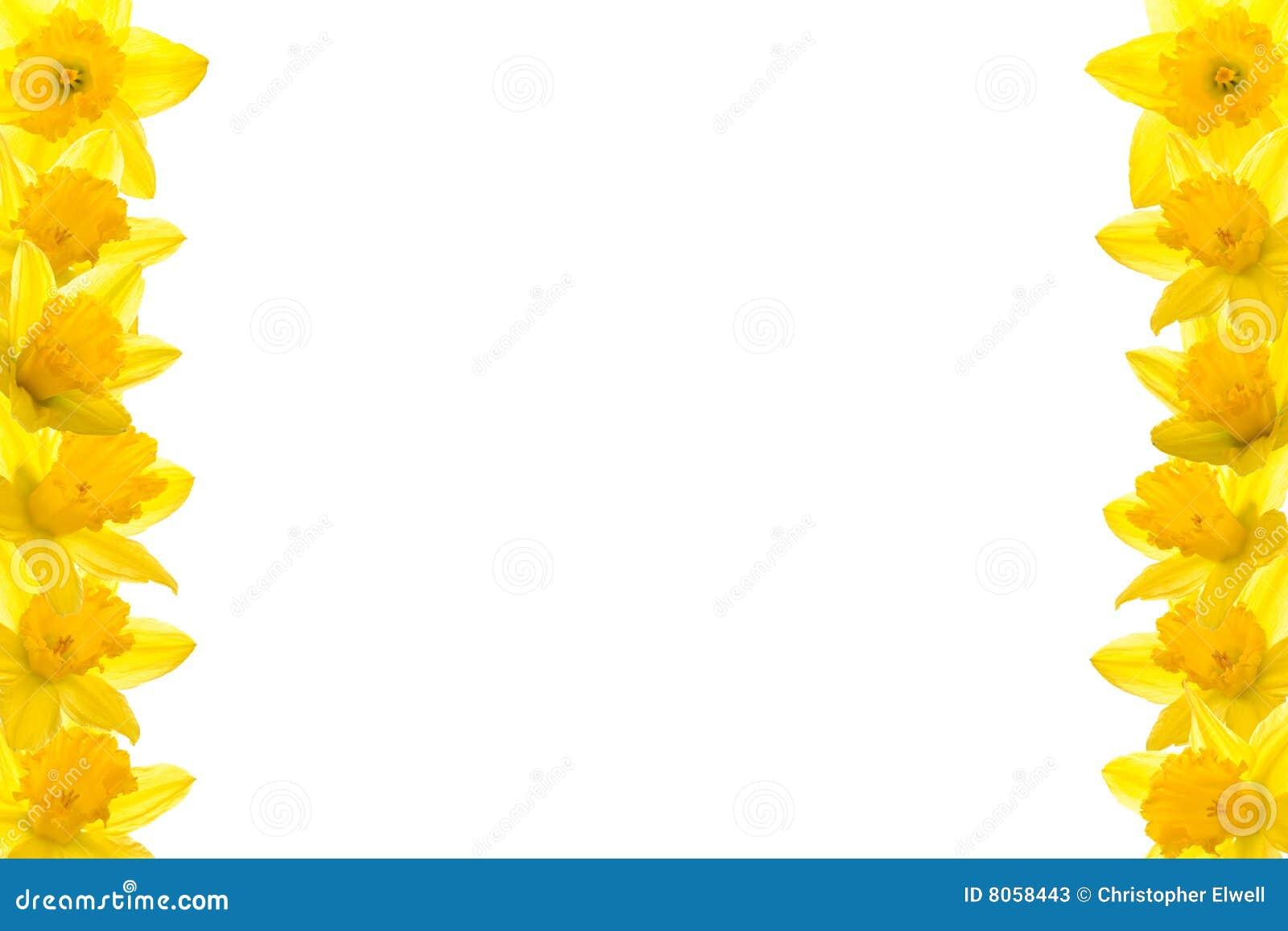 Daffodil Border Stock Photos - Image: 8058443