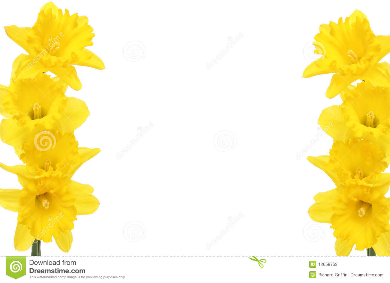 Daffodil Frame Stock Photos - Image: 12658753