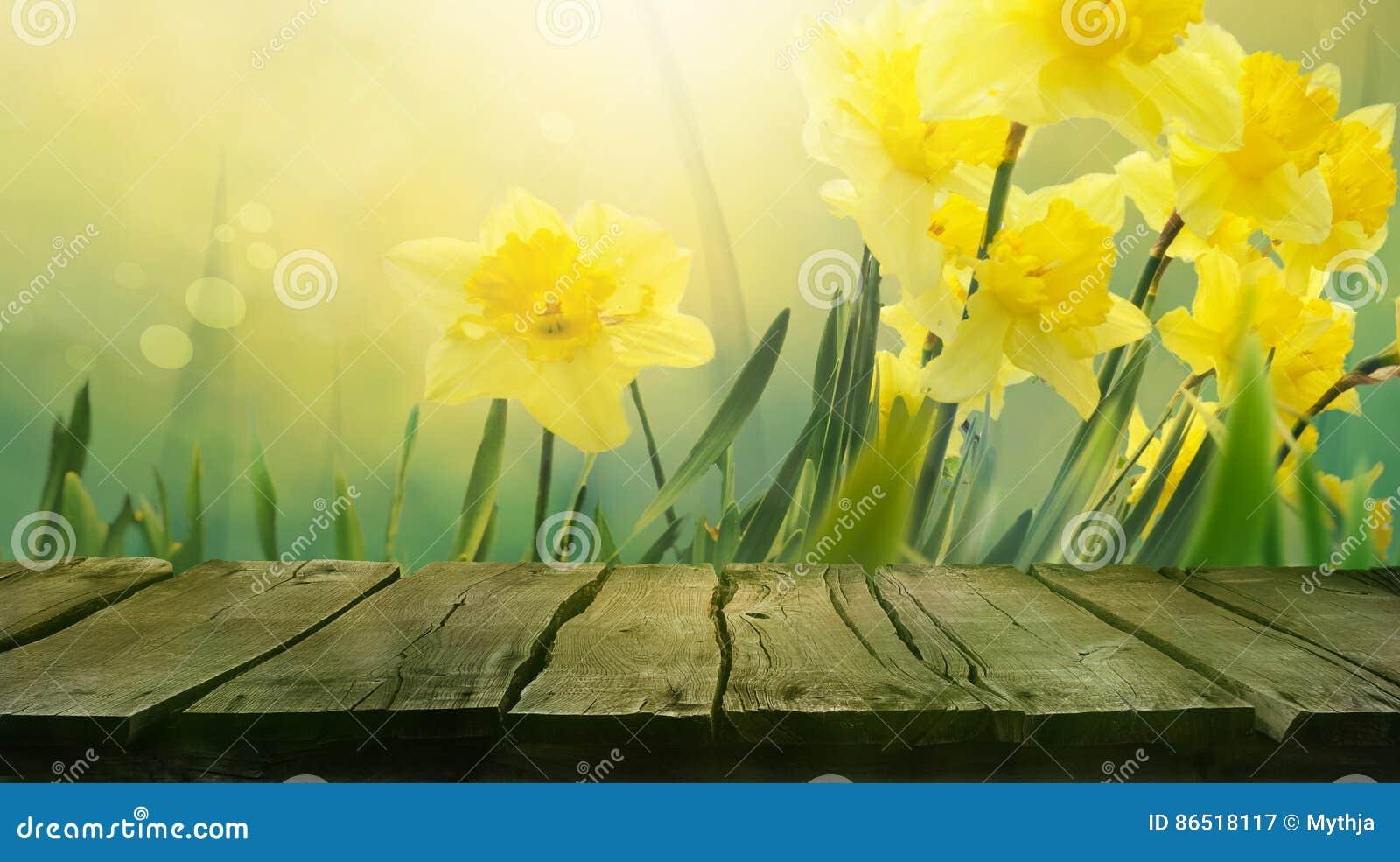 Daffodil Spring Background Stock Illustration Illustration Of