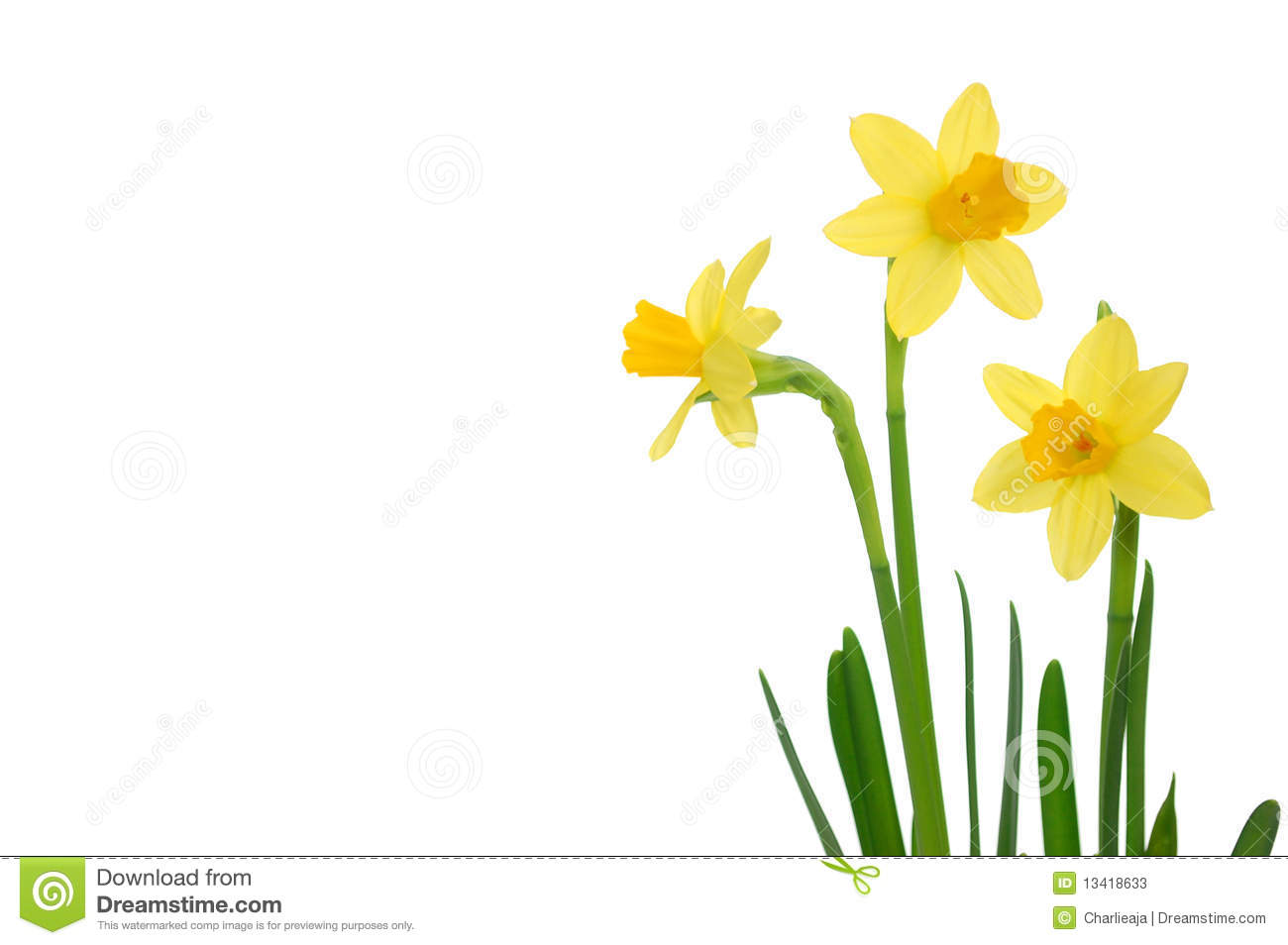 Download Daffodils stock image. Image of flower, daffodils, petals - 13418633