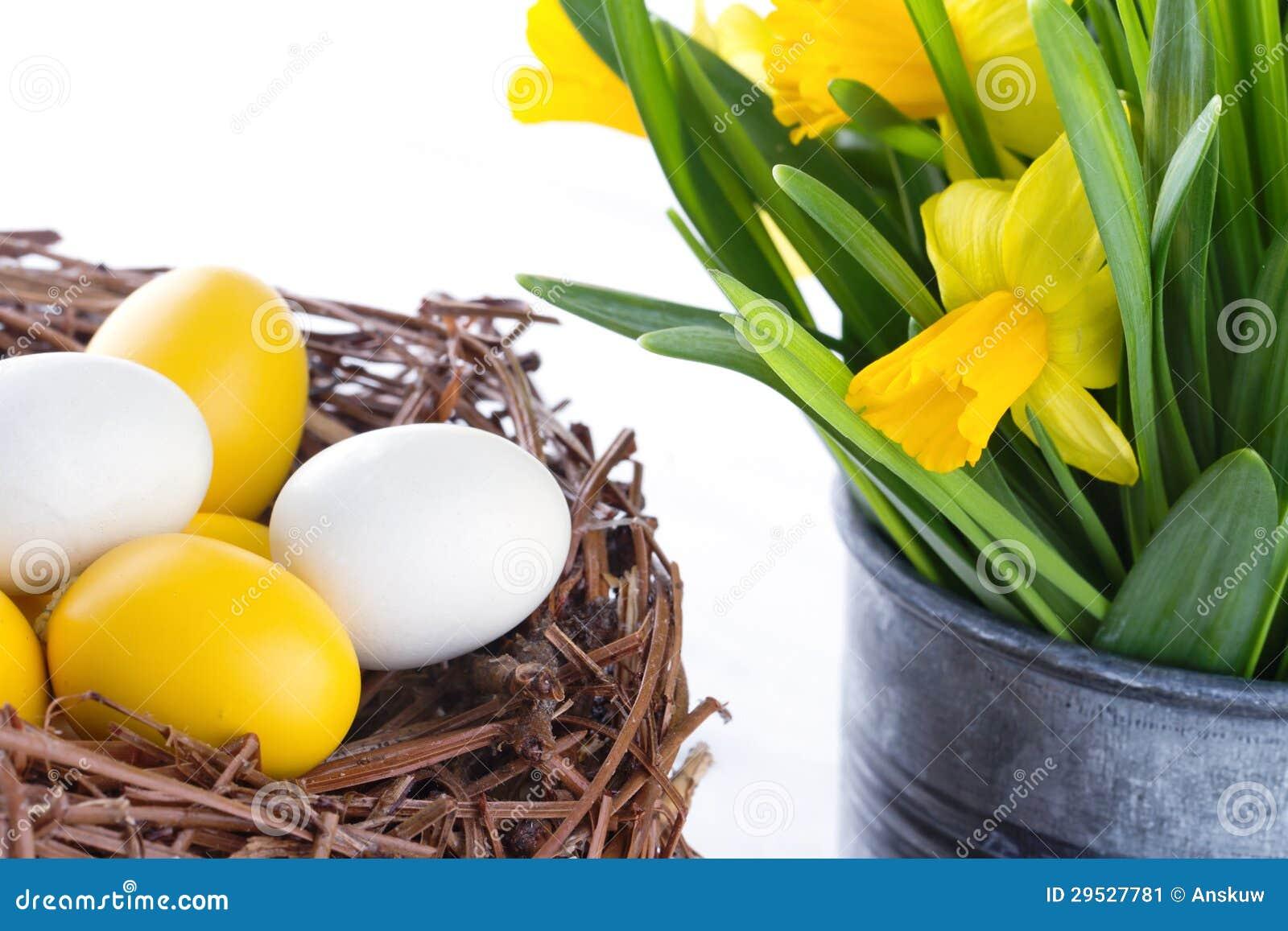 Daffodils e ovos da páscoa em um ninho
