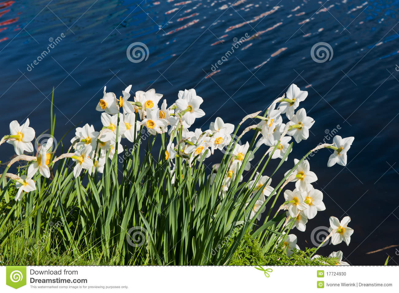 Daffodils In Spring Stock Photo - Image: 17724930