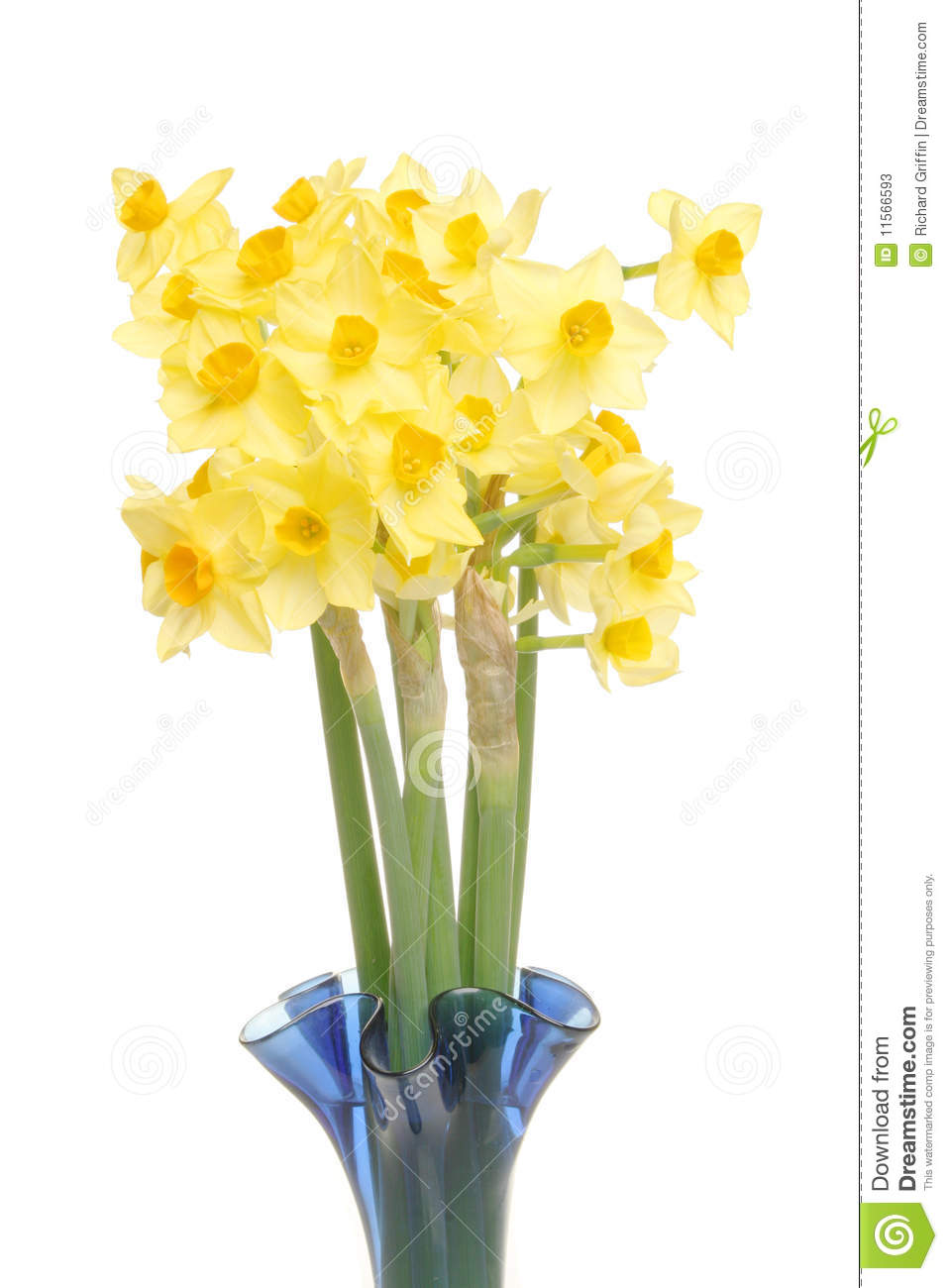 Daffodils In A Vase Stock Photos Image 11566593