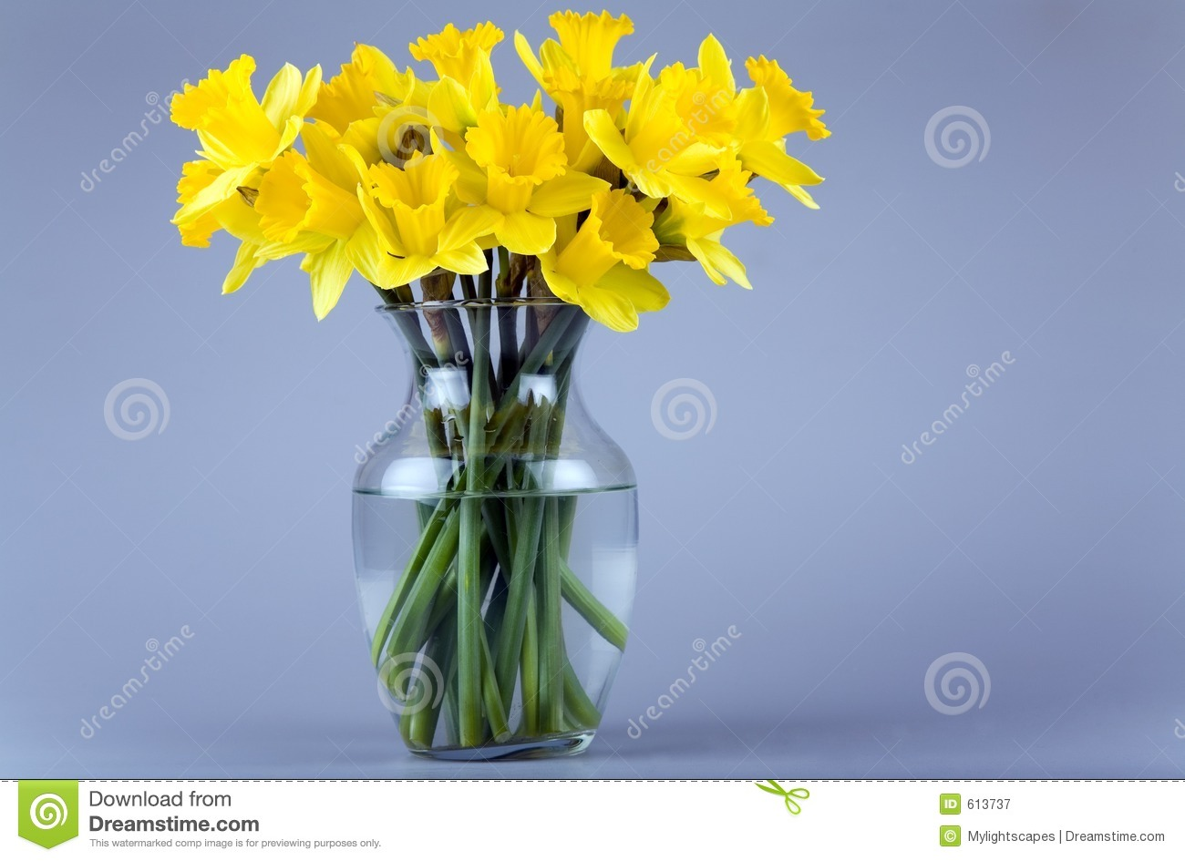 Daffodil flowers in the glass vase with water.