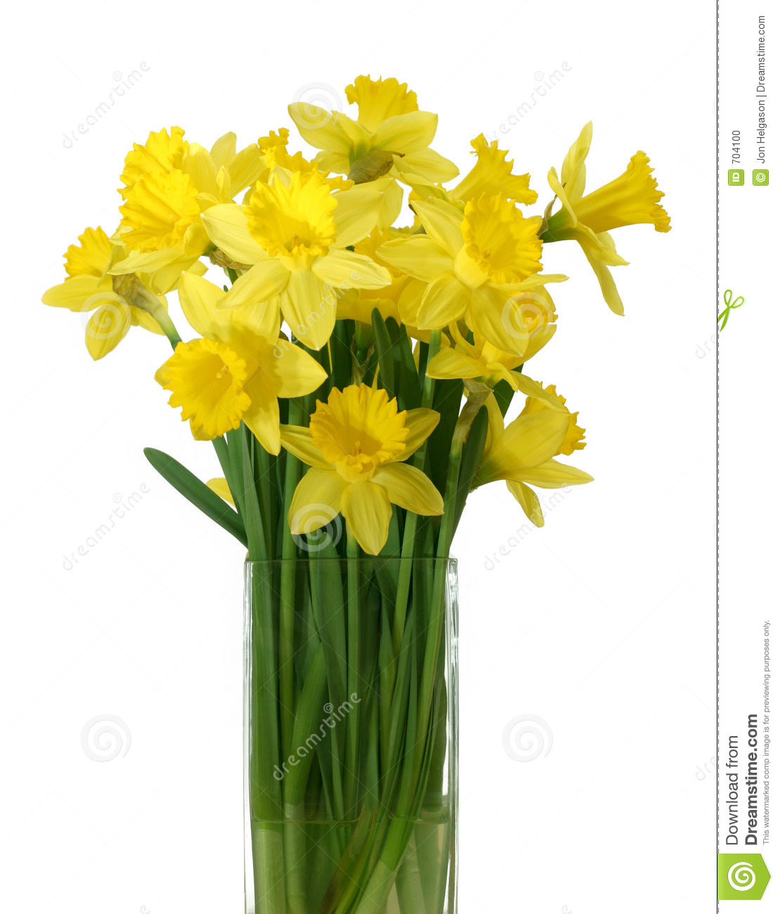 Daffodils In A Vase - Isolated Stock Photo - Image: 704100 White Daisy Flowers Clipart