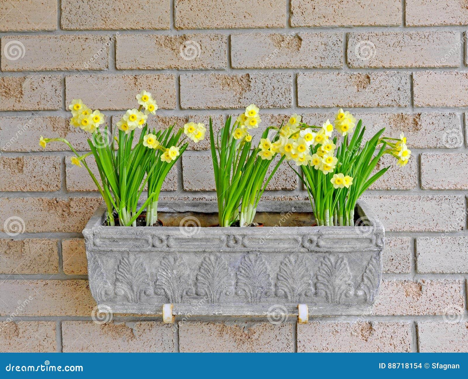 Daffodils In A Window Box Stock Photo Image Of Daffodils 88718154