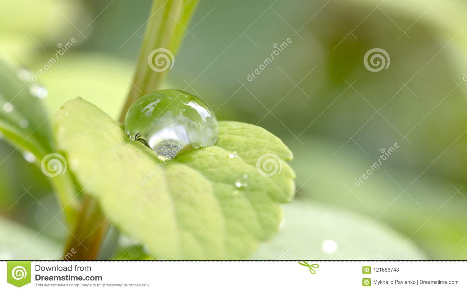 Dagg tappar den gröna leafen