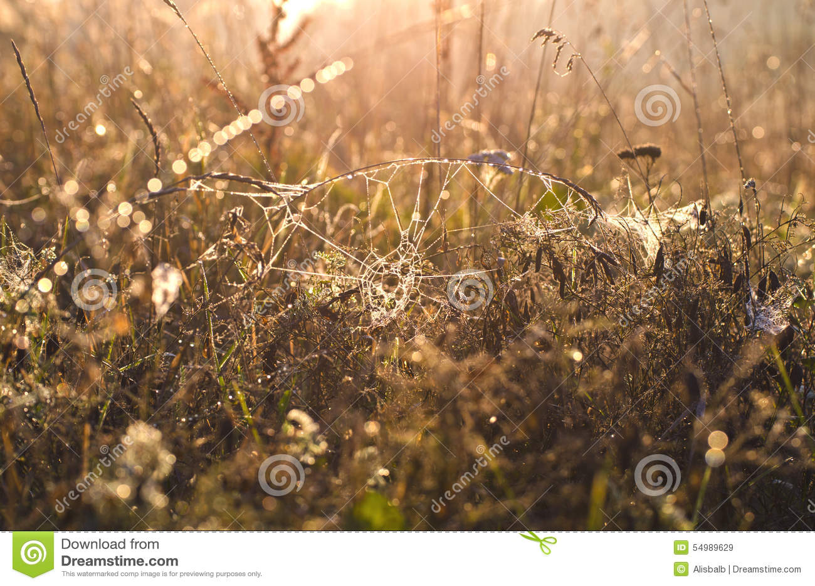 Daggig spiderwed och höstgräsbakgrund