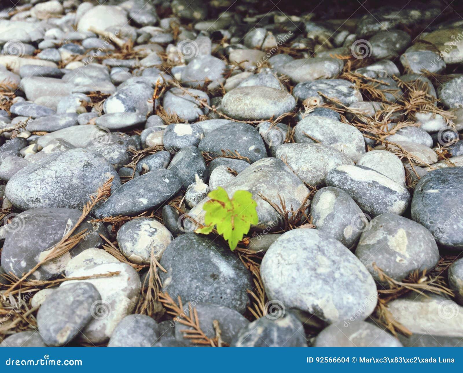 Daggräsplan vaggar naturliv