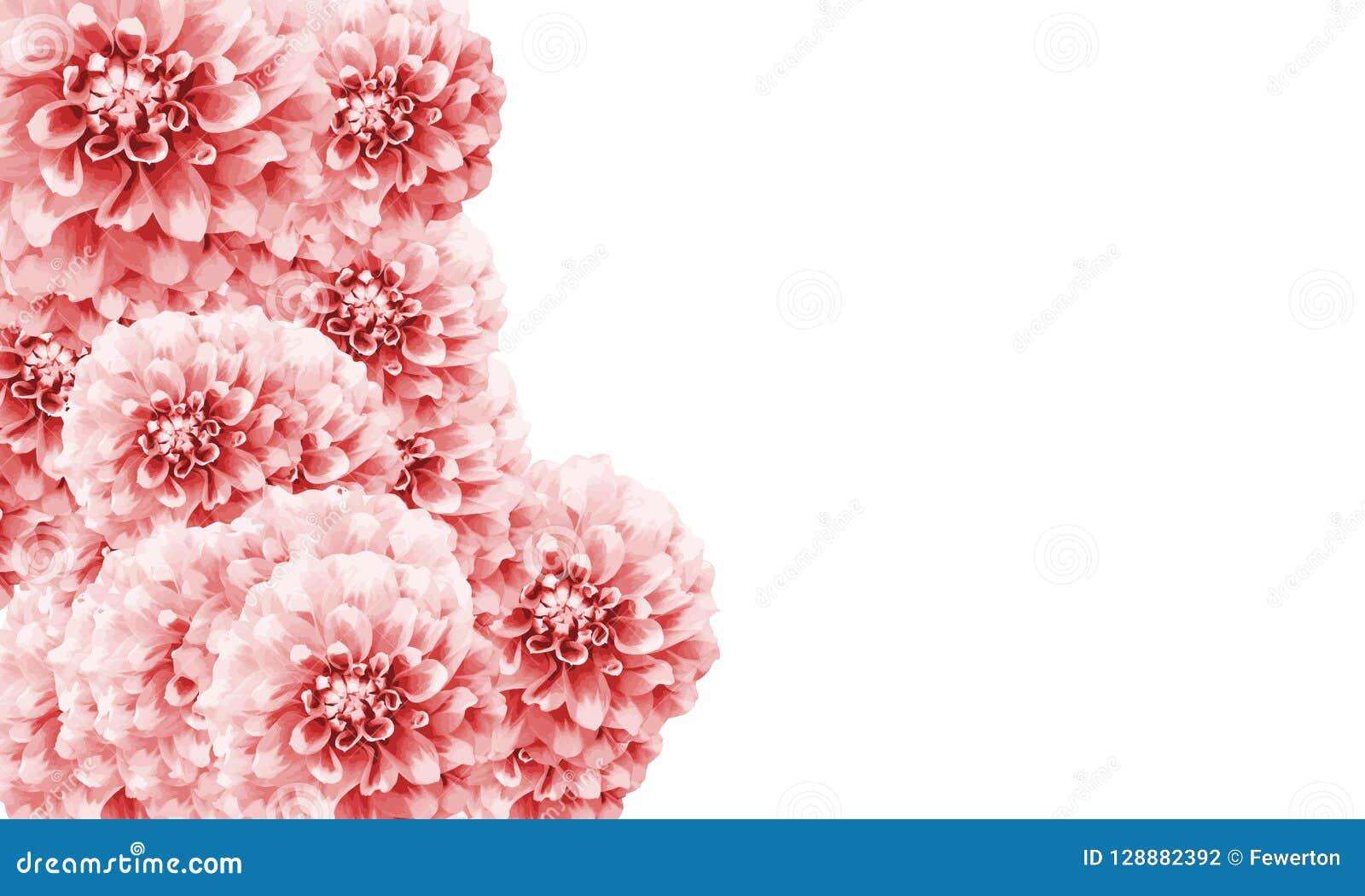 Dahlia Floral Border Frame Background With Light Pink White Dahlia