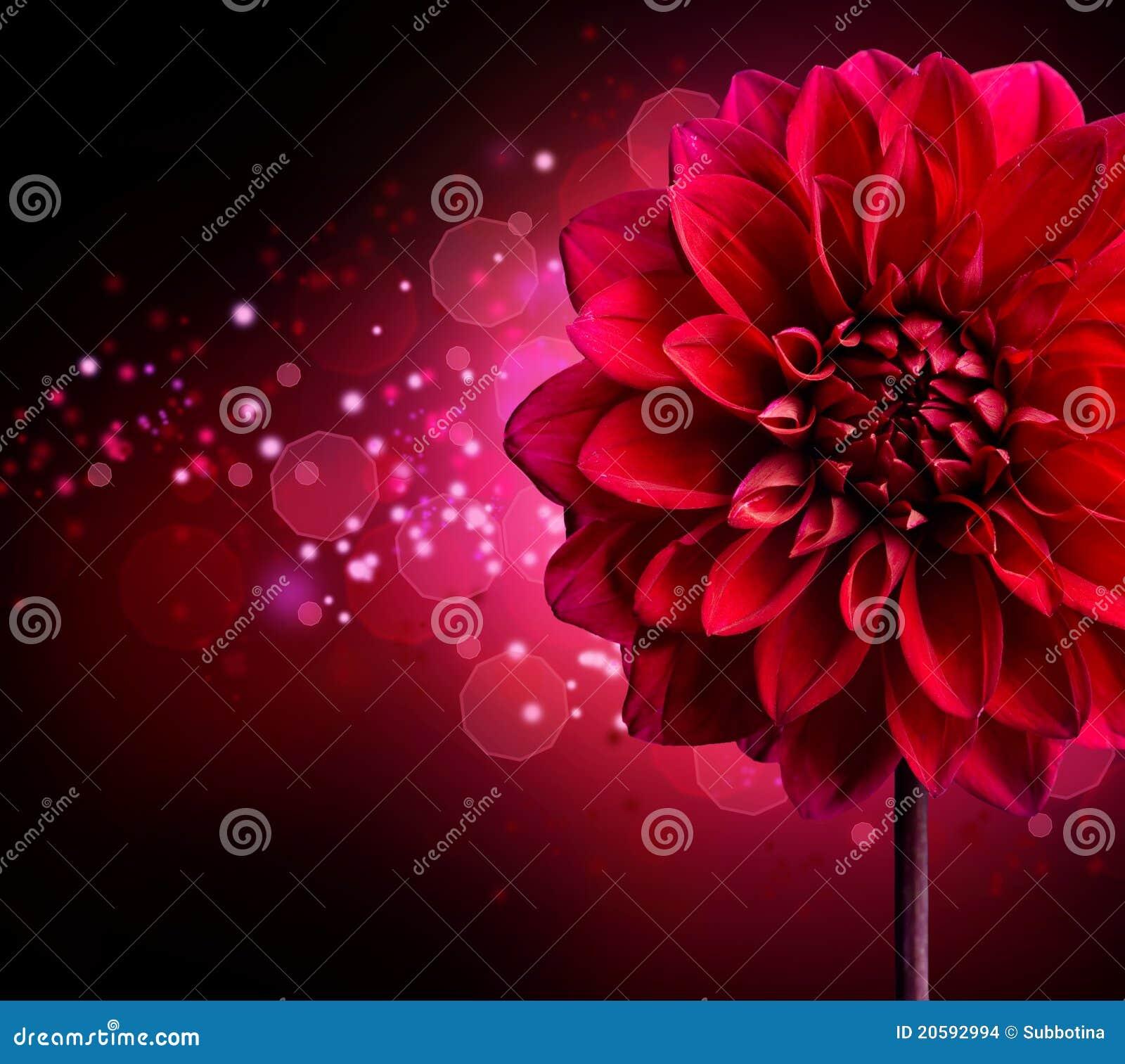 Dahlia flower design