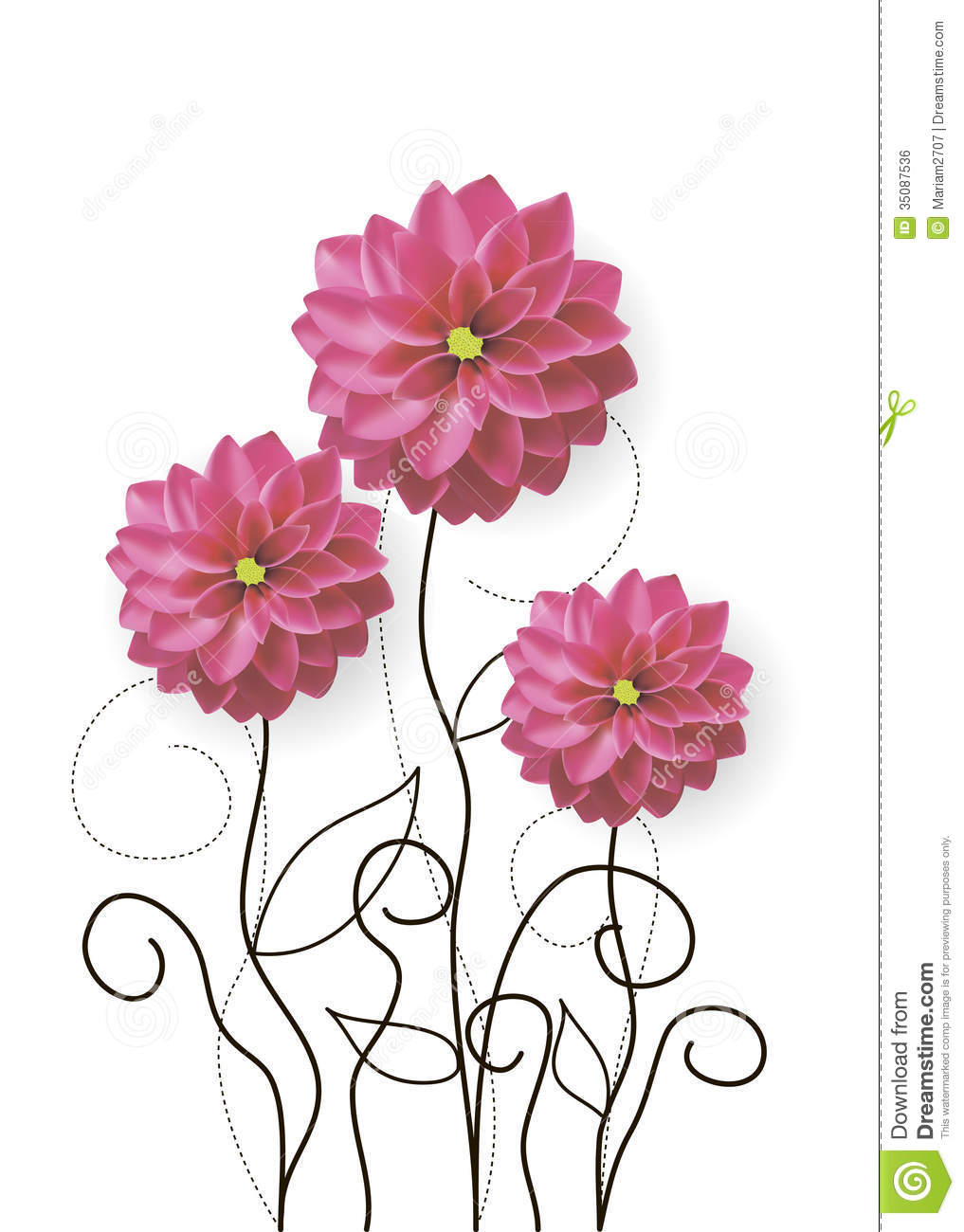 Dahlia Flowers Drawing Royalty Free Stock Image
