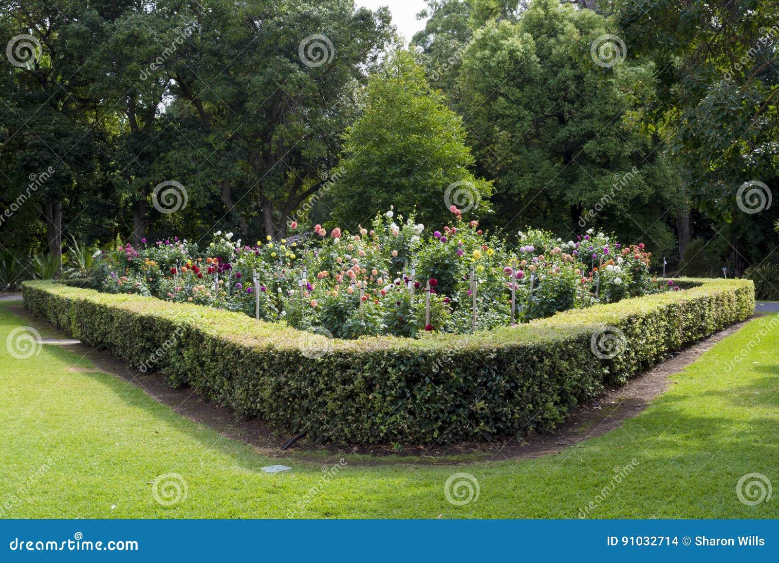 dahlia garden at the adelaide botanic garden  south australia editorial stock image