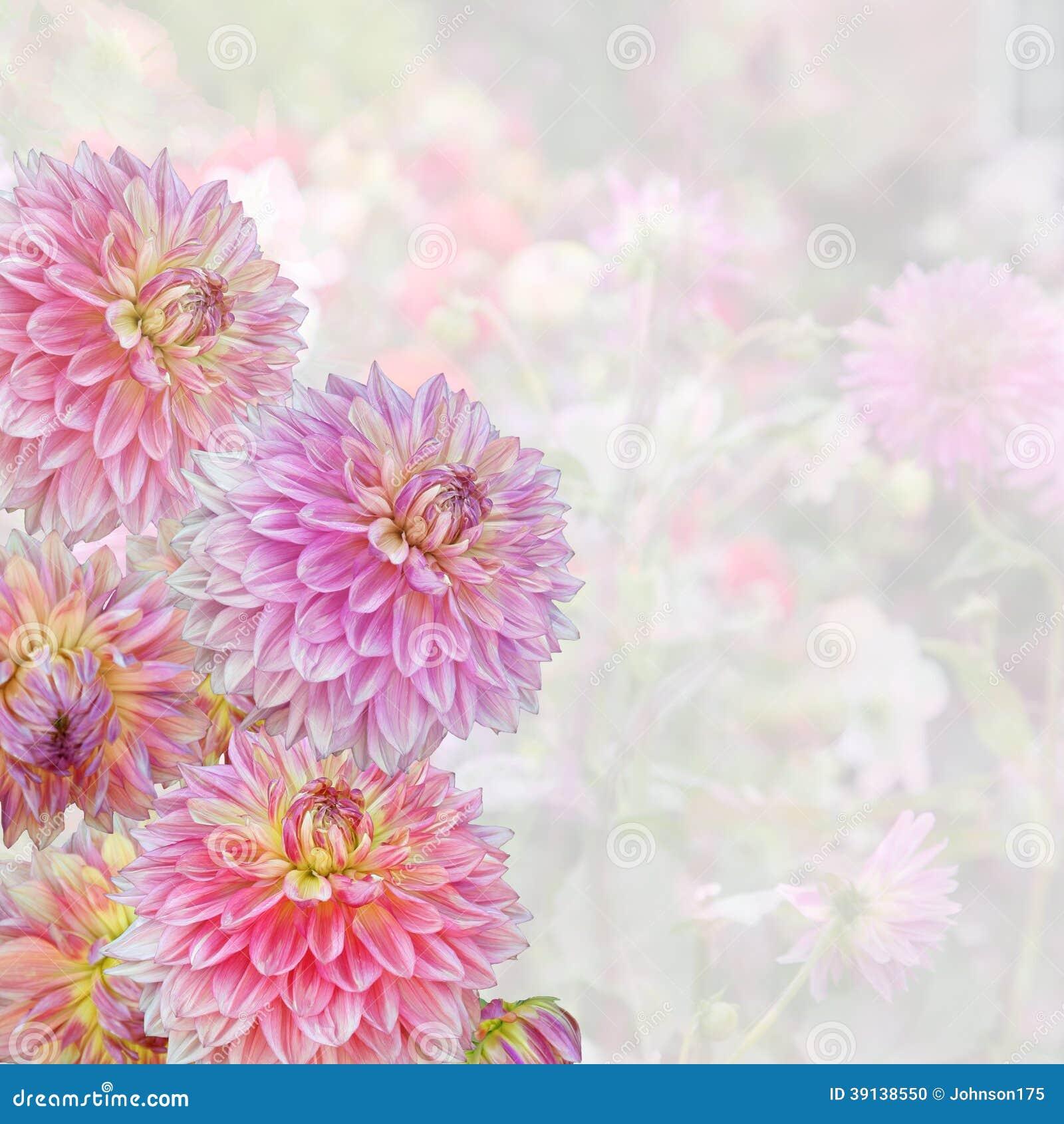 Dahlia rose - fond de jardin