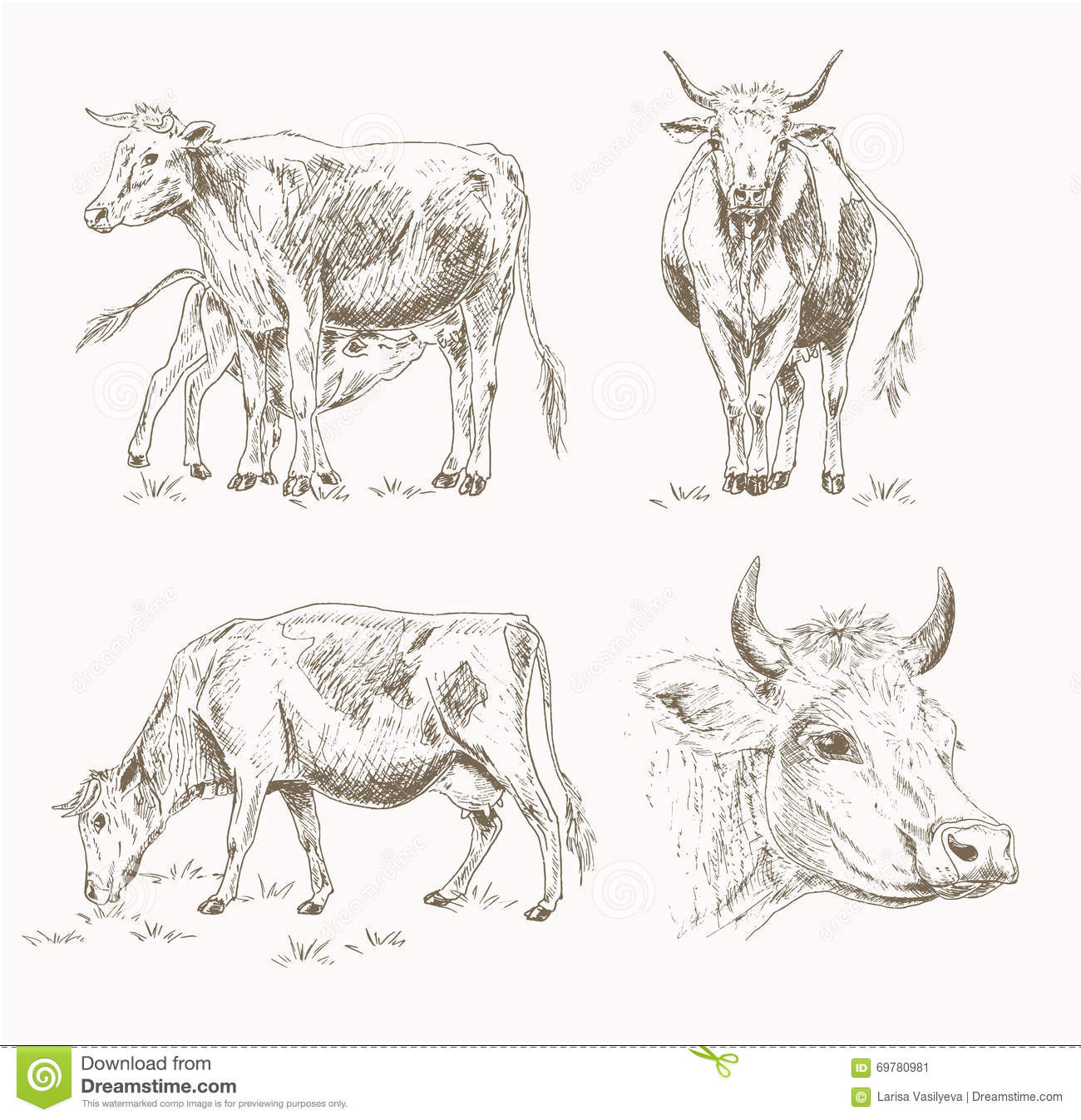 dairy cattle sketch stock vector image 69780981