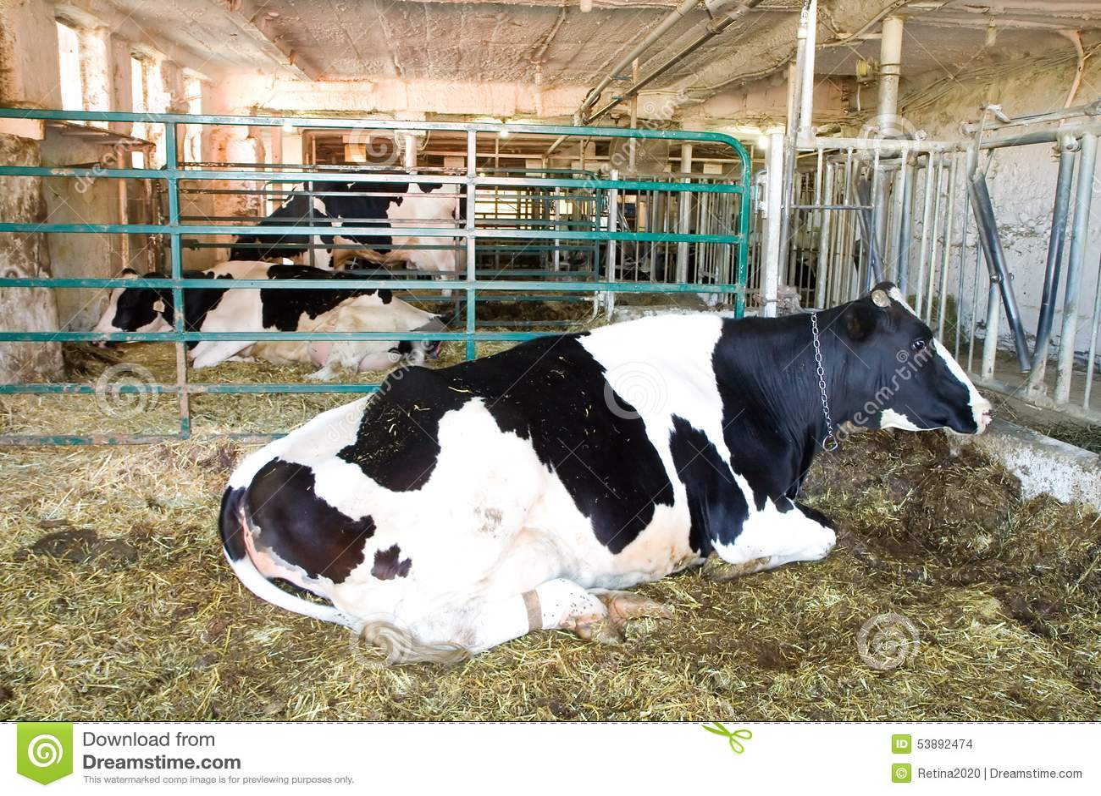 Dairy business plan