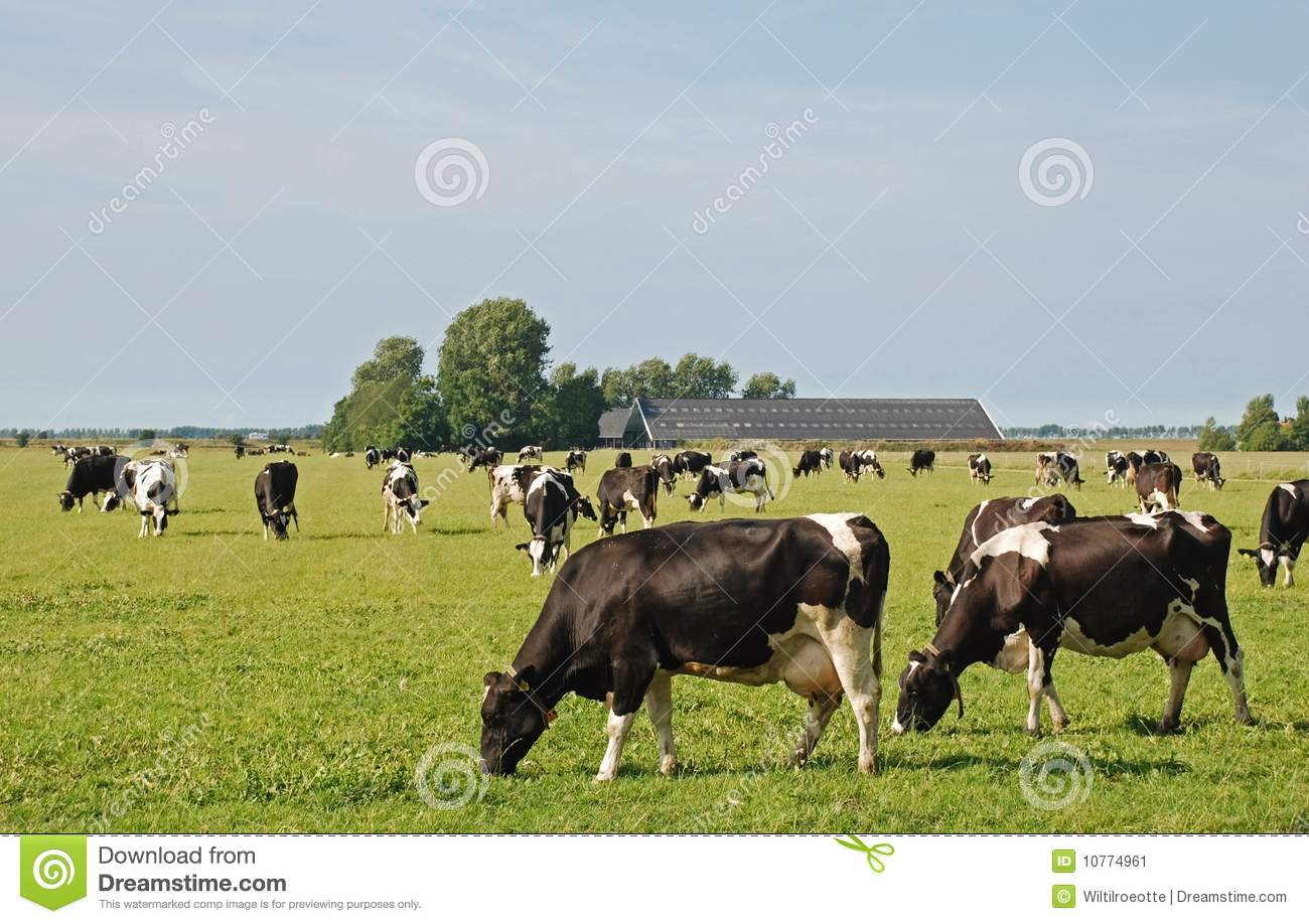 Thesis on agriculture